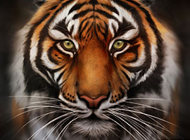 Glass Tiger Window Tinting Tiger Image
